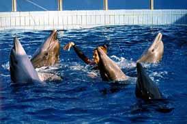 delfini3